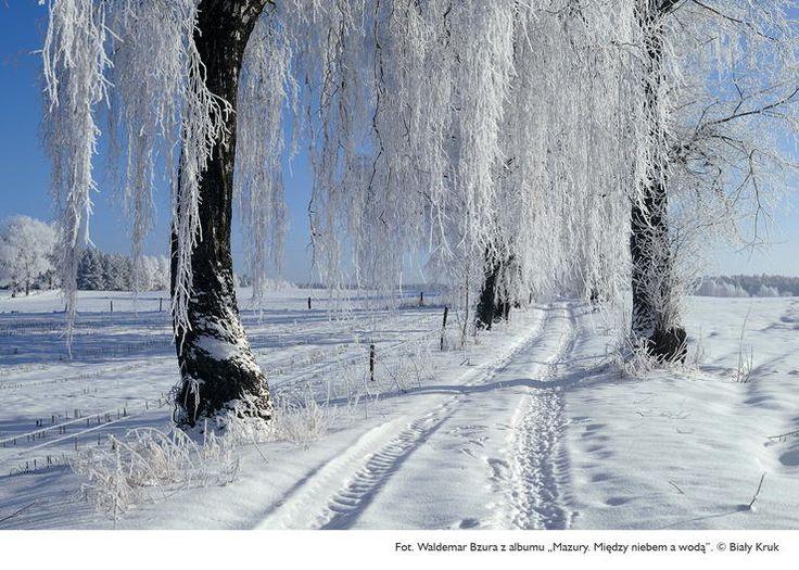 Mazury - między niebem a wodą; dzika przyroda na zdjęciach Waldemara Bzury - Poznaj Polskę