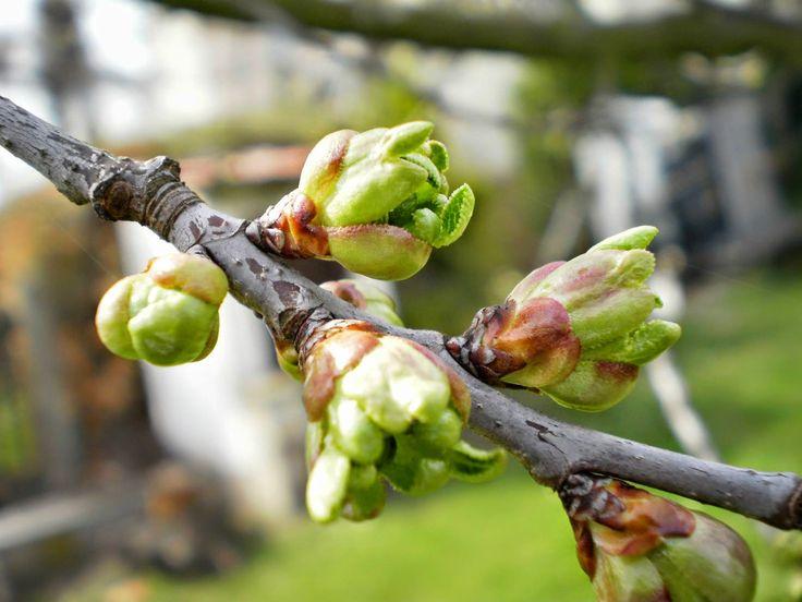 KOČKY SOBĚ: Jaro přišlo s teplými dny. Příroda se raduje a str...