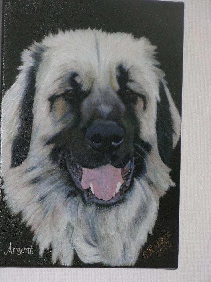 This is our Polar Bear Argent - oil on canvas. Unfortunately we lost him just over a month ago :-( but now have his beautiful face hanging up in our lounge too.