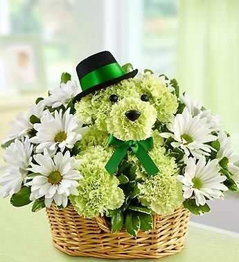 Lucky™ #95186  Make your favorite lad or lass feel like one lucky dog with our playful puppy-shaped St. Patrick's Day a-DOG-able® arrangement. Crafted from fresh lime green carnations and cheerful poms, he's accented with a jaunty top hat and green ribbon, ready to make Irish eyes of all ages smile.$49.99 www.1800flowers4giftSeattle.com