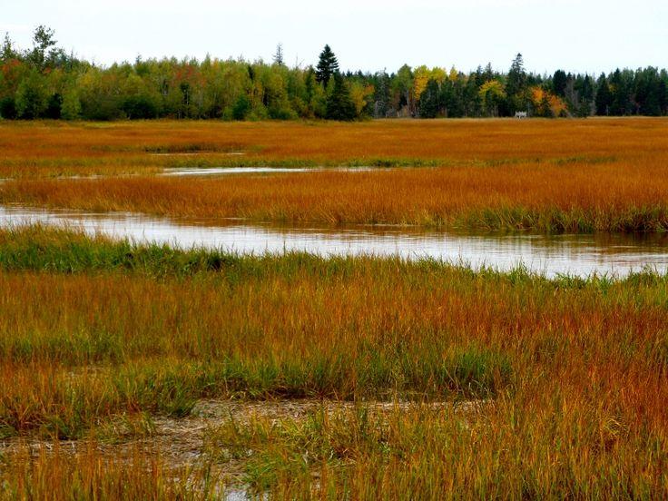 New Brunswickin the fall