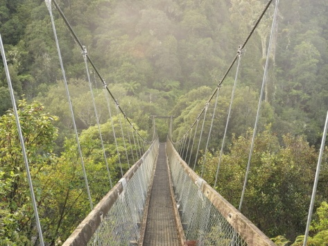 Swingbridge, Motu Falls, Motu, Gisborne, New Zealand,