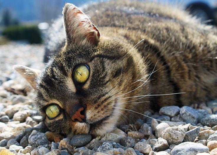 Kitty #cat #mycat