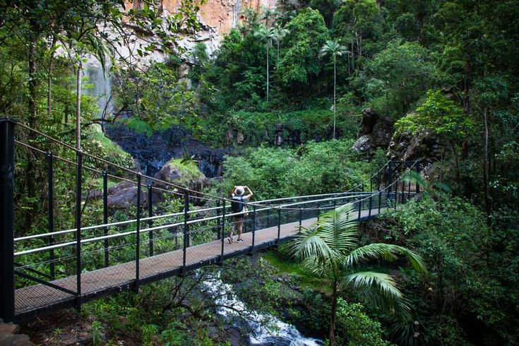 GORGEOUS! Beauty of #Purlingbrook Falls in #Springbrook #National #Park! #Nomadic #traveller