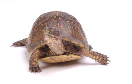 Pet Turtle care: Creating Turtle Ponds Pet Turtle Care