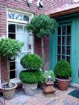 Potted trees and shrubs. Good article with helpful tips. Most helpful article I've found so far.