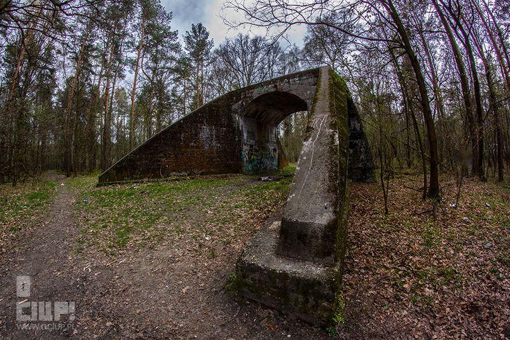 O ciup!: The secrets of the forest www.ociup.pl by Kaja Świętochowska