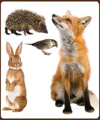 Haal de dieren uit bos naar de kinderkamer met deze muurstickers.