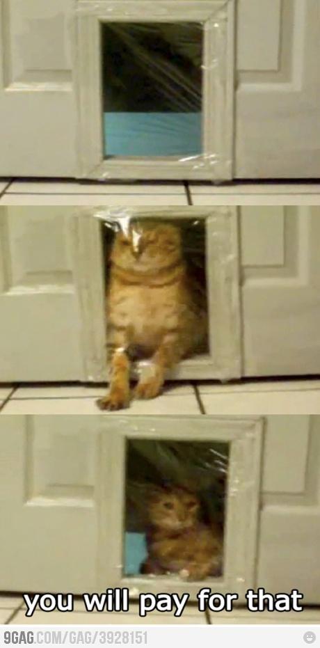 Trolling the cat