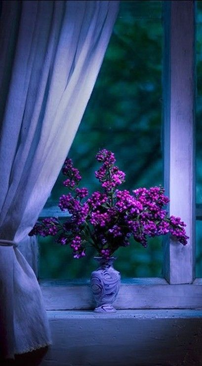 Mystery Misc 34 Photos Beautiful Purple Things And Window View