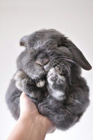 1000+ images about bunny on Pinterest | Bunny toys, Rabbit hutches ...