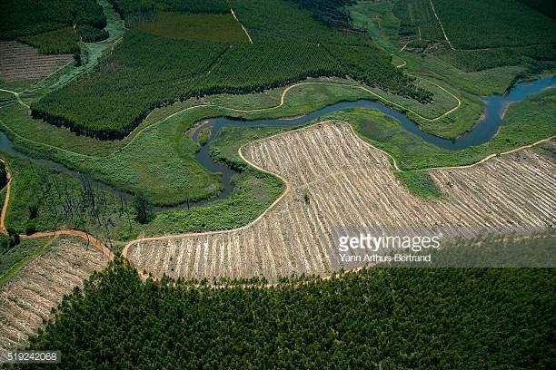 Image result for nelspruit timberplantations