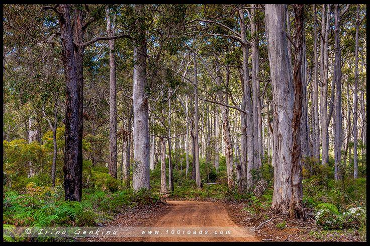 Boranup Forest, Западная Австралия, Western Australia, Австралия, Australia