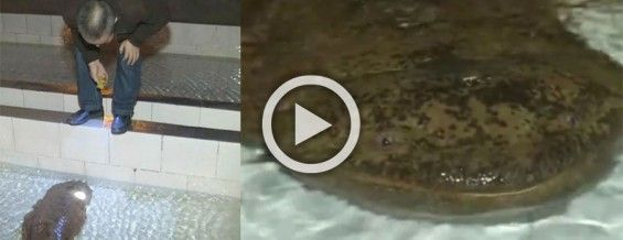 Esta salamandra gigante de 200 años fue encontrada en una cueva de China #viral