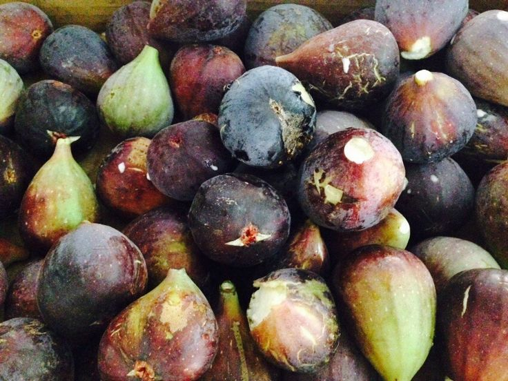 Fresh organic figs right here from our farm. You won't get fresher or more organic than this!