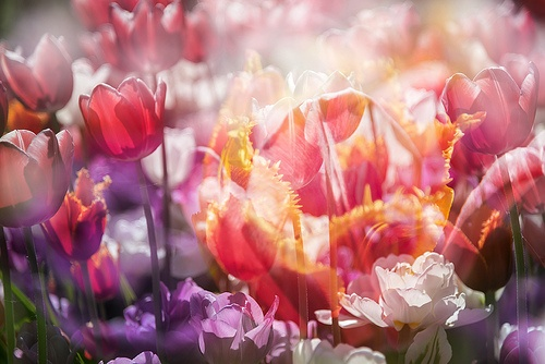 Flora Plenteous 28