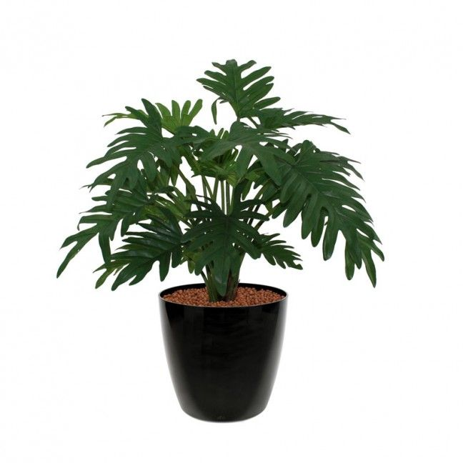 http://www.maxifleur-kunstplanten.nl/philodendron-xanadu-50cm.html?gclid=COLItoi7qswCFbYK0wodjFwAZg