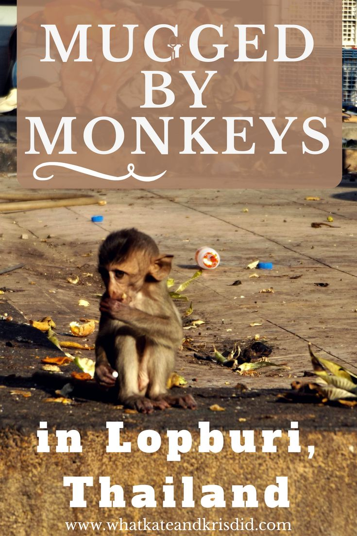 Seeing the Monkeys and temples in Lopburi Thailand