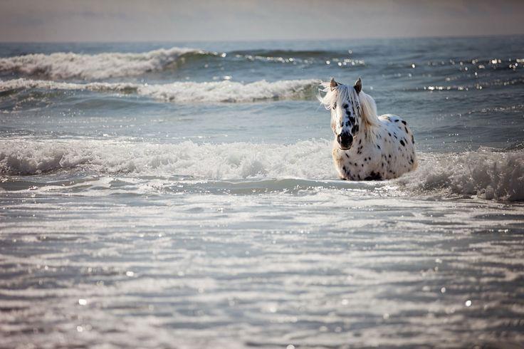 Stuart Gordon - pictures of horse - 3000x2000 px