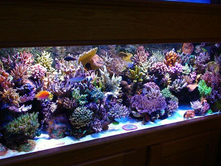 Les 331 meilleures images du tableau poissons pour for Accessoire aquarium