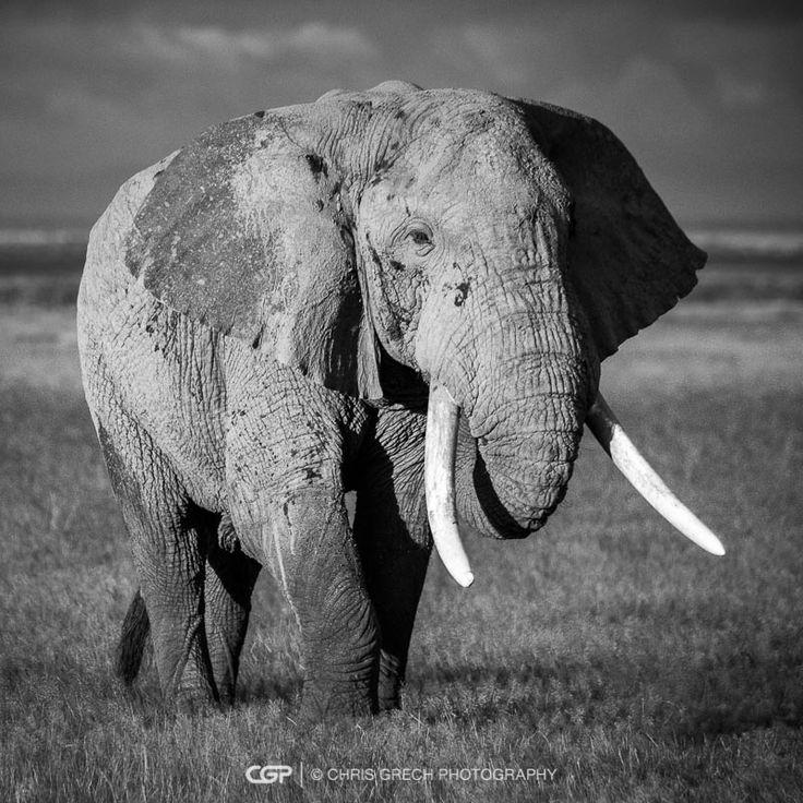 Wanderer II - Chris Grech Photography