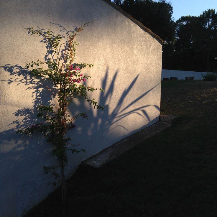 Sunset - flowershadows