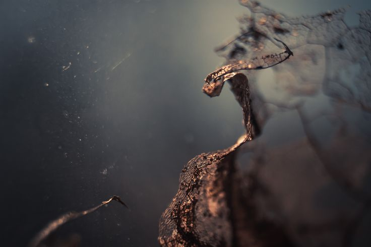 Under the surface on Behance