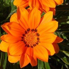 Pembe Dudaklar: Sivilcelerle Mücadelede Doğal Çözüm Aynısefa Çiçeğ...