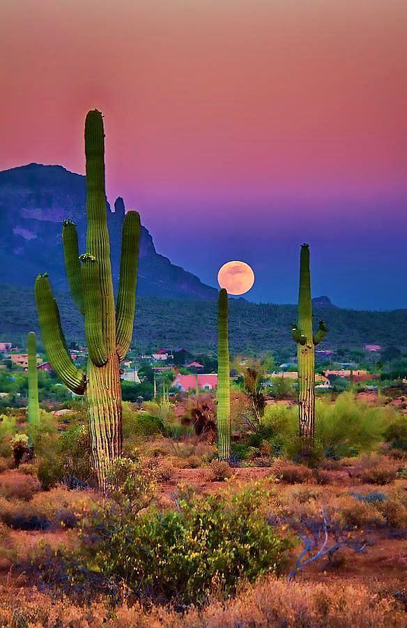 #Arizona #Sunsets. #Cactus