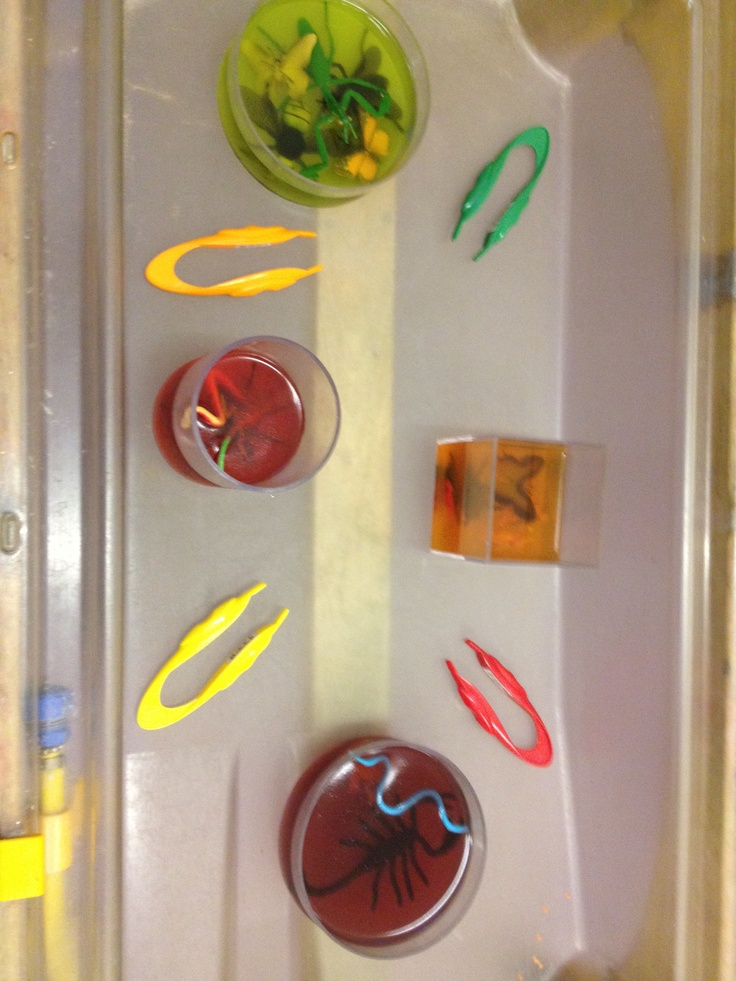 Insects and jelly fine motor fun
