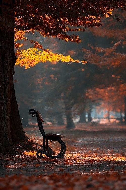 autumn leaves on bench - photo #23