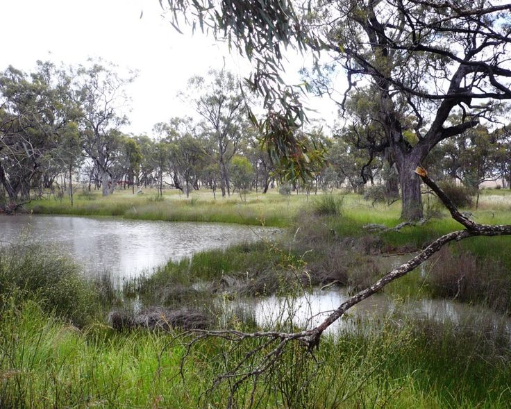 The waterhole in the Nurcoung Bushland Reserve, where it is believed, the children were taken to be revived.
