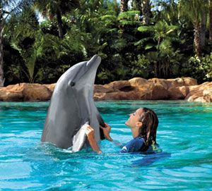 Definitely swimming with dolphins at Discovery Cove in Florida! I have always wanted to do this!