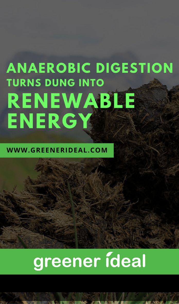 Anaerobic digestion is turning cow – well you know – dung – into environmentally-friendly energy to heat and power your home. Actually, anaerobic digestion is turning your dung into renewable power too. #renewablehomeenergy
