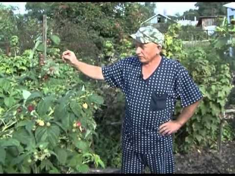 Зеленый сад фильм № 65 от 09.10.2010г.
