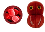 Plush Flesh-Eating Disease (Streptococcus Pyogenes). This guy is 3000x as big as the original, and he is much more friendly! These make great novelty gifts for all ages!