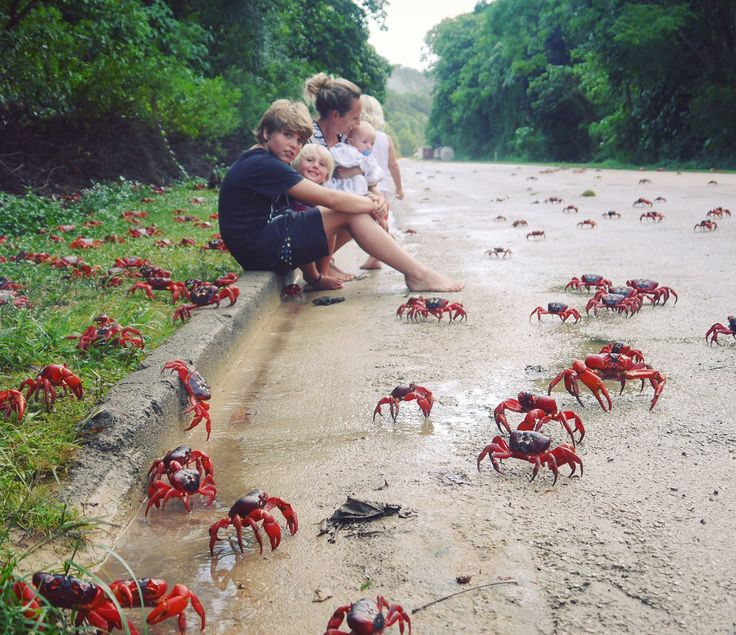 The Thomas Family and the red crab migration