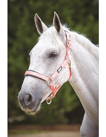 ROMA PASTEL HEADCOLLAR PEACH/BLACK