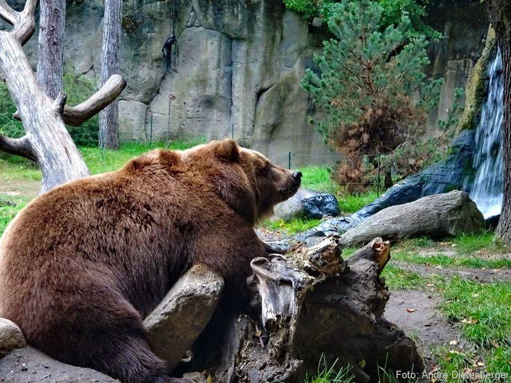 Reiseblogger André nimmt euch mit in den Tierpark Hagenbeck in Hamburg. ✔