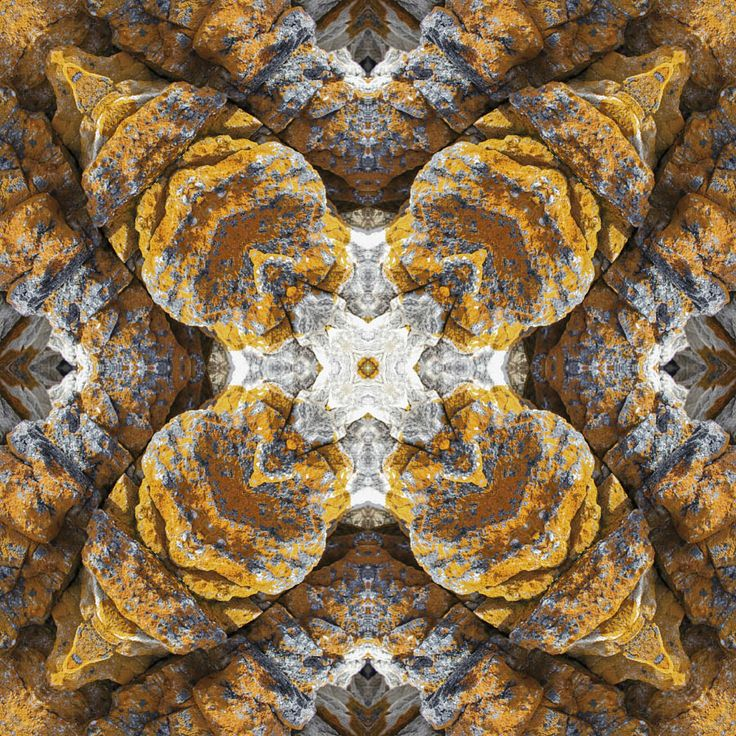 Lichen on Rock Mandala 52 cm 52 cm LIMITED Edition Giclee Prints available. http://julianventer.com/ ©julianventer