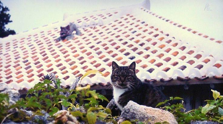 Cats in Japan (Okinawa) photographed by Mitsuaki Iwago