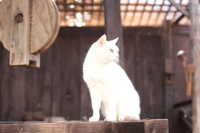 スペシャルドラマ「猫侍 玉之丞、江戸へ行く」撮影現場の様子。
