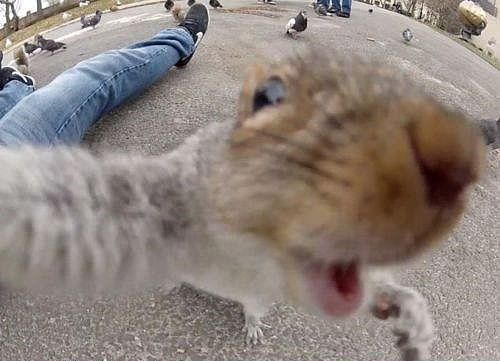 21 Animal Selfies That Are Shutting It Down: Just Squirrelin' Around