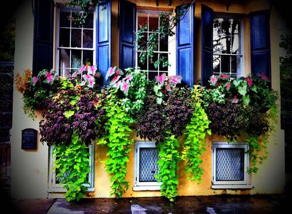44 Best Charleston Window Boxes Images On Pinterest