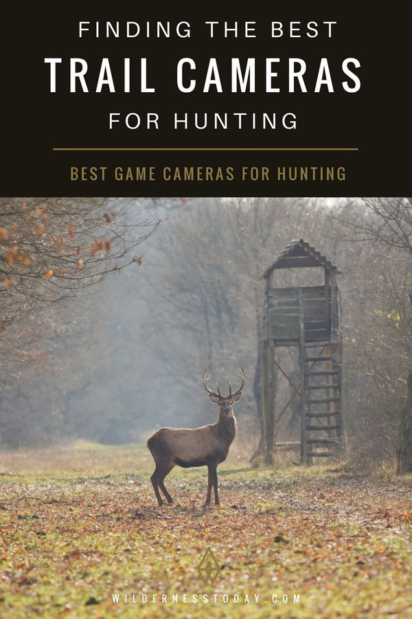 Best Trail Cameras of 2018: Top Game Camera Reviews | Outdoors