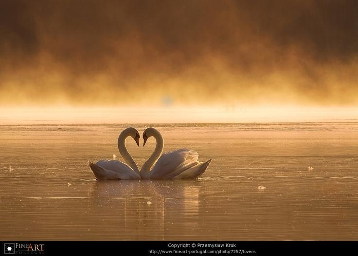 .: Oregon, God, Animal Photography, Animal Kingdom, Secret Places, Swan Heart, Beautiful Birds, Natural Heart, Lovers Animal