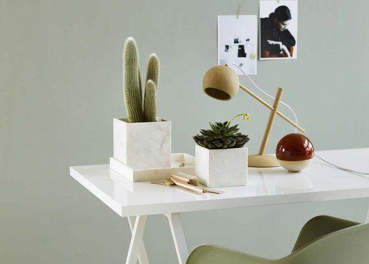 Kaktuser og sukkulenter er fortsatt trendy.