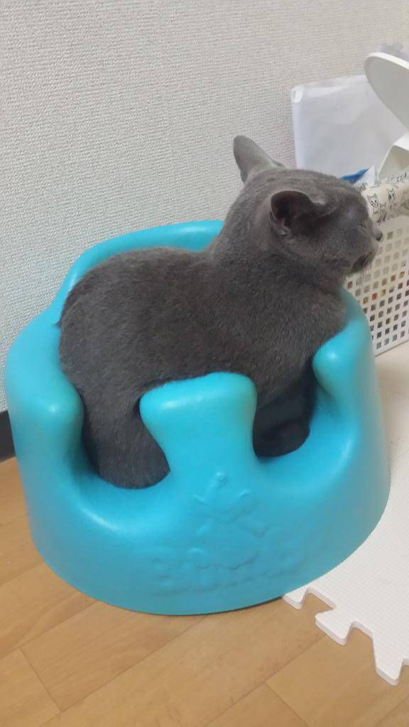What? It fits, so I sits.