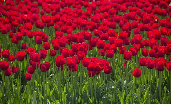 Canadian Geographic Photo Club - Field of Red & Green