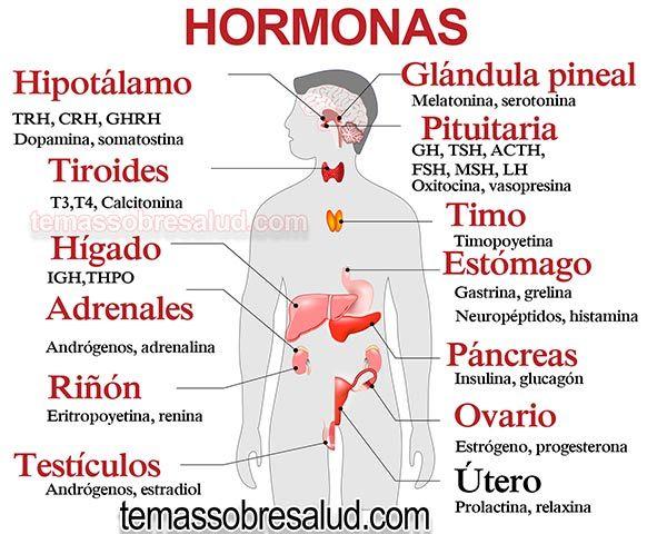 Aumento de peso despu s de una colecistectom a anatom a - Alimentos prohibidos vesicula ...